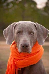 Dog wearing a scarf photo
