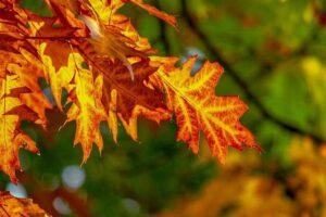 Fall Folliage photo